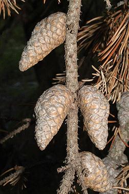 giardiasis zóna - Lehet-e teherbe esni, ha férgek, Pinusférgek jönnek ki a végbélnyílásból