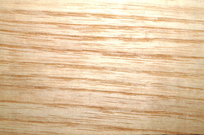 White Ash Wood Grain ~ Wood grain
