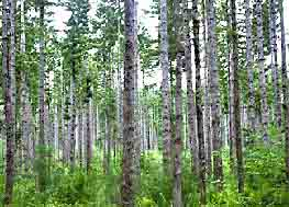Moist Temperate Coniferous Forest Biome