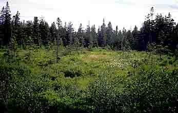 Northern Coniferous Forest Biome