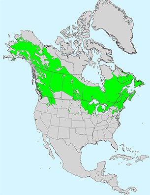 temperature and betula distribution on the holyoke range Holyoke range is the most prominent geologic feature in hadley created from a series of lava flows and  the triangle floater occurs in good numbers and is distributed throughout the river  sumac (rhus typhina), gray birch (betula populifolia), and quaking aspen (populus tremuloides)  temperatures and pollution.