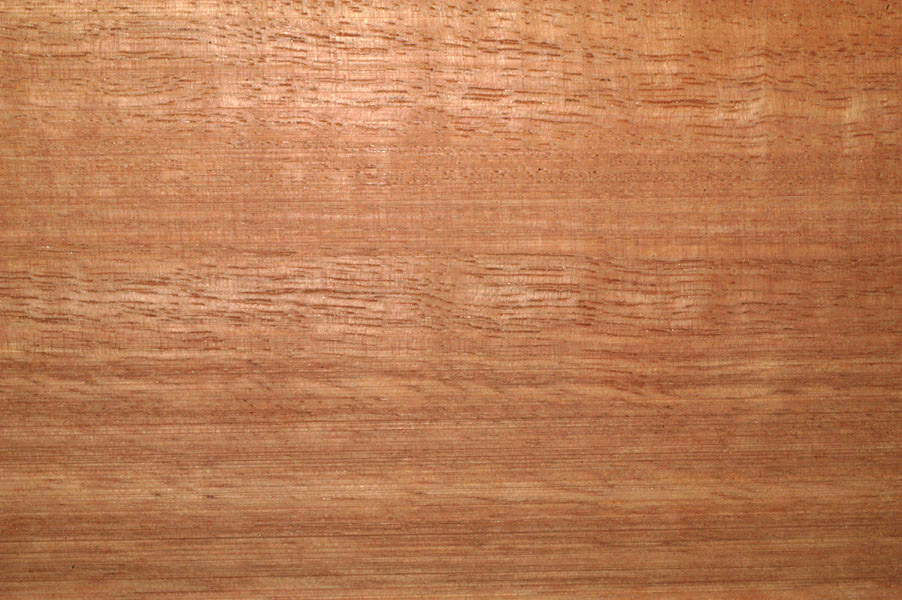 Eucalyptus Has A Pleasing Reddish Tint