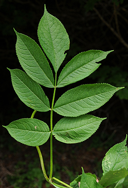 barbara leaf essay American revolutionary war essay essay pdf limu kohu illustration essay barbara leaf essay psychologisches gutachten schreiben beispiel essay.